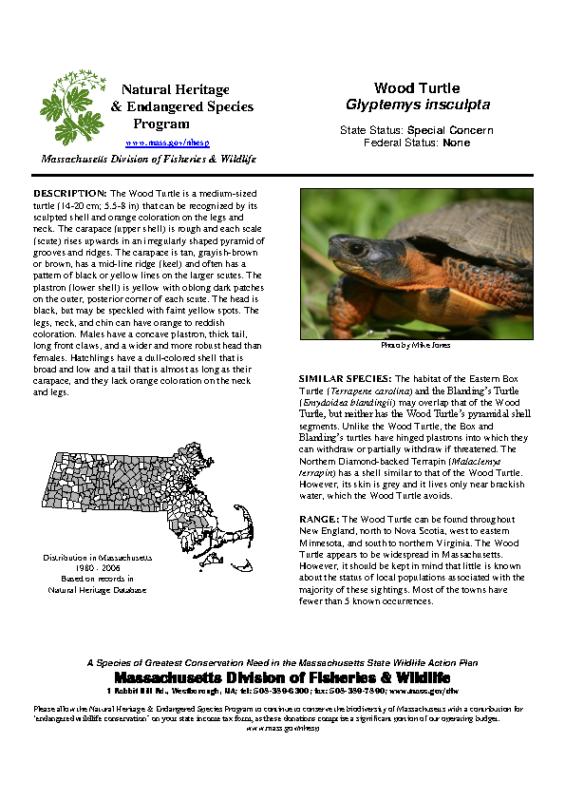 Wood Turtles Glyptemys insculpta